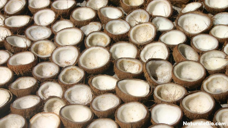 essicazione olio di cocco