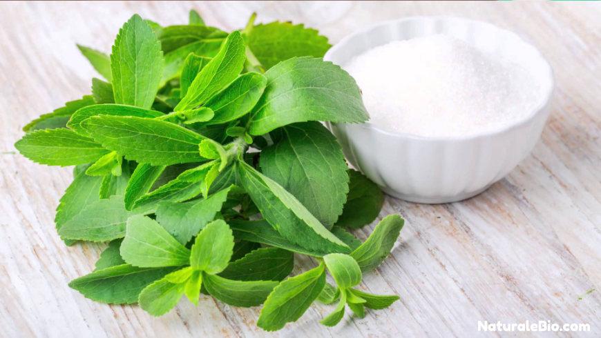 dentifricio con olio di cocco stevia